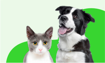 Best dog insurance and cat insurance plan