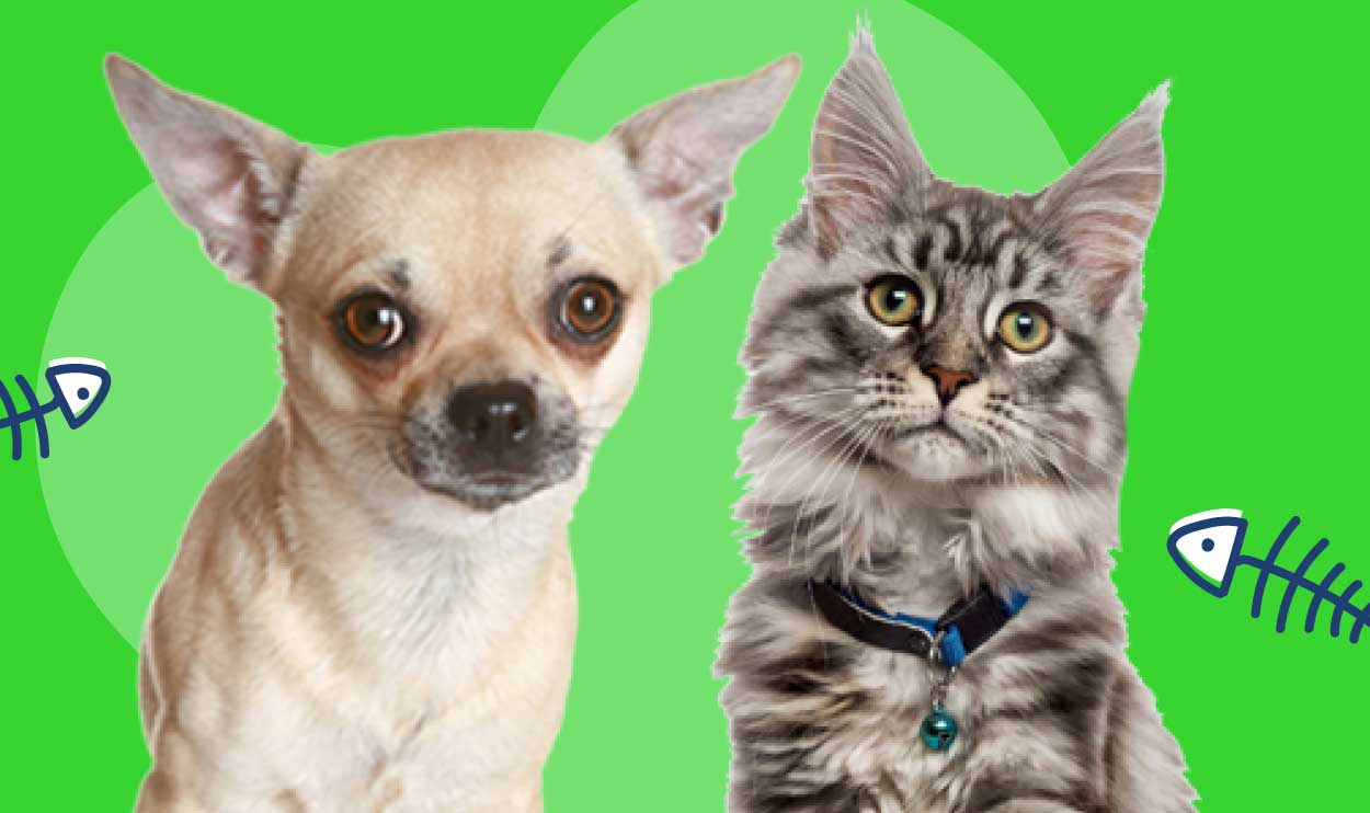 Choosing the right pet for your lifestyle